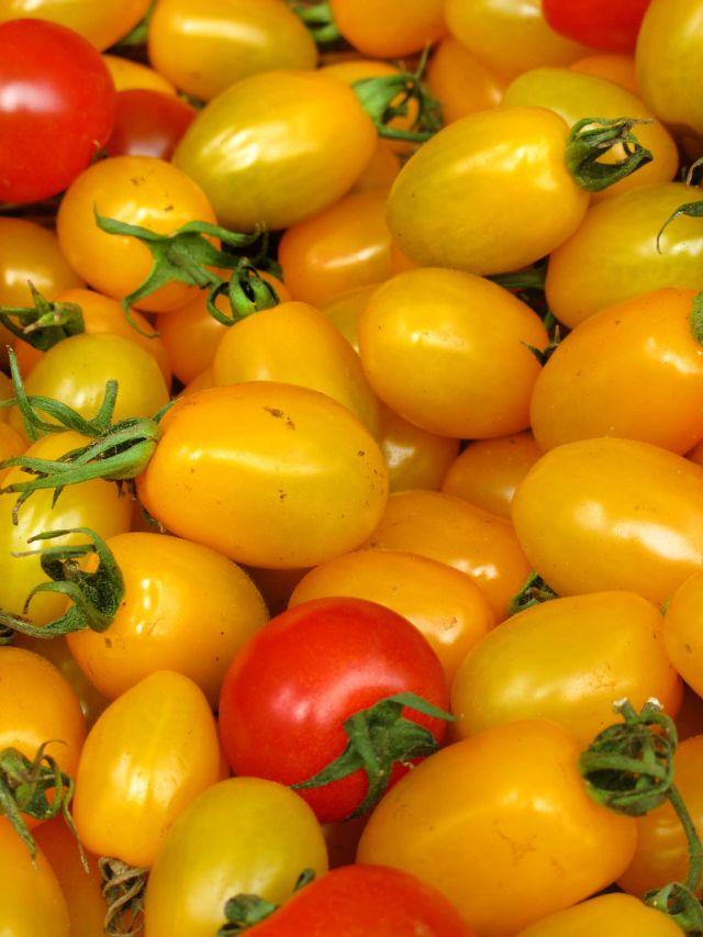 2015_07_30-JennisTable-tomato-season-02